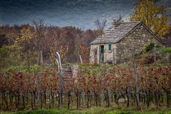 Old stone house. Next to a wineyard on the hill in autumn Stock Photography