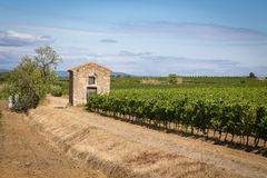 An old stone hut in the middle of the vineyards Stock Photography