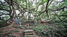 Old stone made temple at Miaoli, Taiwan stock video