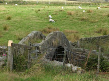 Old stone medieval bridge with grazing sheep Royalty Free Stock Photography