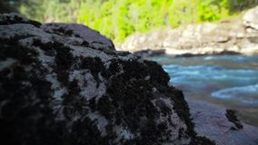 Old stone with a moss on coast of mountain river stock video footage
