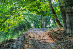 Old stone pathway in the park Royalty Free Stock Photo