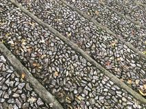 Old stone pavement decorated with autumn leaves. And wood lines Royalty Free Stock Image