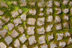 Old stone pavement with sprouting moss texture Royalty Free Stock Photos