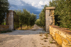 Old stone pillars with wrought iron gates and an olive grove with a dirt road Royalty Free Stock Image