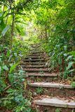 Old stone stair in green tropical forest as part of hiking trail. Jungle. Old stone stair in green tropical forest as part of hiking trail. Concrete brick royalty free stock photography