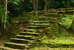 Old Stone Stairs in Ciudad Perdida, Colombia. Old stone stairs leading to a terrace in Ciudad Perdida, built by the people of Tayrona. This archeological site is Stock Images