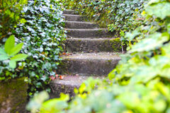 Old stone stairs with ivy Royalty Free Stock Photos