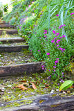 Old stone stairs with ivy Stock Photos