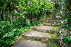 Old stone stairs in the jungle rainforest. Thick tropical greenery, Bali Indonesia Royalty Free Stock Photos