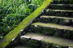 Old stone stairs in the jungle rainforest. Thick tropical greenery, Bali Indonesia Royalty Free Stock Photography