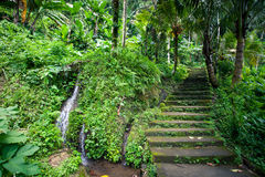 Old stone stairs in the jungle with a waterfall. Lush tropical greenery, Bali Indonesia Stock Photo