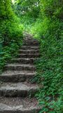 Stairs uphill in green forest. Old stone stairs leading uphill among green plants in the forest Royalty Free Stock Photos