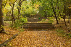 Old stone stairs in the park Royalty Free Stock Image