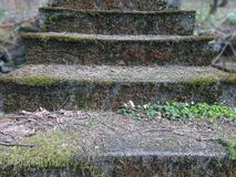 Old stone stairs with thickets of bushes. Stairs in the jungle. Nature ruthlessly destroys the traces. Of an ancient human civilization Stock Image