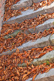 Old Stone Stairway Stock Images