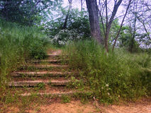 Old stone stairway in a forest park Stock Image