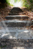 Old stone stairway to jungle Stock Photography