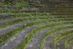 Old stone steps Stock Photography