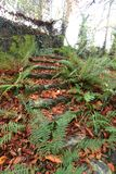 Old stone steps, covered with autumn leaves. Autumn in Wicklow, Ireland stock photo