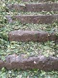 Old stairs covered with leaves Royalty Free Stock Photo