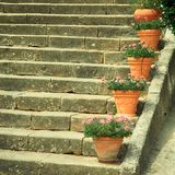 Old stone steps decorated by flower pots, Italy royalty free stock images