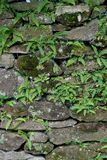 Old Stone Wall Stock Image
