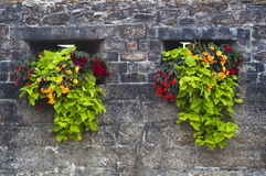 Old stone wall adorned with red and yellow flowers Royalty Free Stock Image