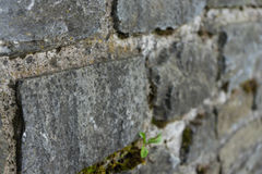 Old stone wall close up Royalty Free Stock Photos