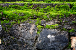 Old stone wall covered green moss Stock Images