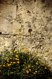 Old stone wall and daisy flowes Royalty Free Stock Image