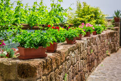 Old stone wall with flowers Stock Image