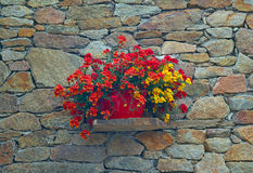 Old stone wall with flowers. In a pot as background stock photography