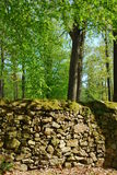 Old stone wall in a forest Royalty Free Stock Photography