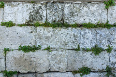 Old stone wall with green ivy as background Stock Photo