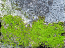 Old stone wall with green moss.  Stock Photography