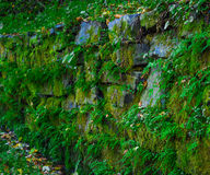 Old stone wall with green moss and plants. Stock Photography