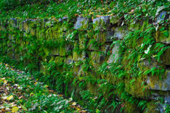 Old stone wall with green moss and plants. Stock Photo