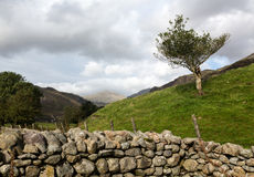 Old stone wall in Lake District Royalty Free Stock Photo