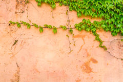 Old stone wall with leaves . Royalty Free Stock Images