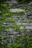 Old stone wall with leaves background Royalty Free Stock Photos