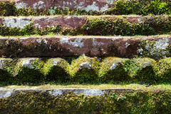 Old stone wall with leaves and moss Royalty Free Stock Photography