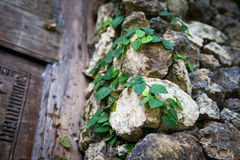 Old stone wall with leaves and moss Royalty Free Stock Photo