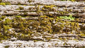 Moss and lichen covered stone Royalty Free Stock Images