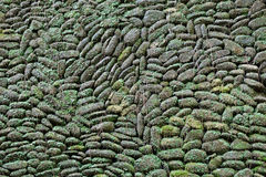 Old stone wall with moss and plants background Royalty Free Stock Photo