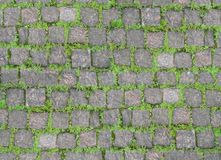 Old stone wall overgrown with grass Royalty Free Stock Photos