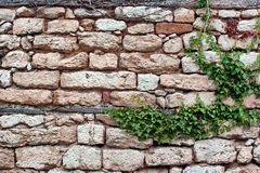 Old Stone Wall With Plants Stock Photo