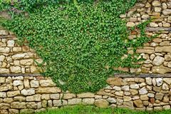 Old Stone Wall With Plants Royalty Free Stock Photos
