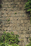 Old stone wall with plants. Texture Royalty Free Stock Photos