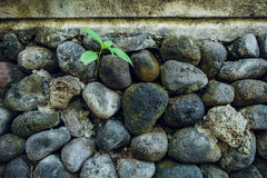 Old stone wall with plants. Texture Stock Photo